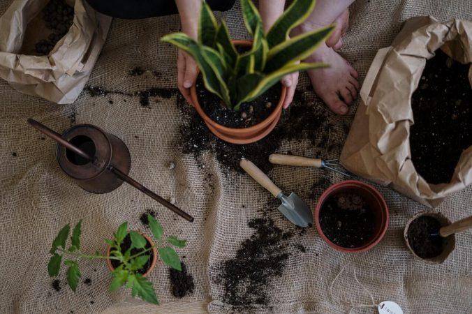 Top 5 prezentów, które ucieszą niejednego ogrodnika